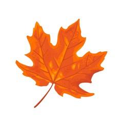 Maple leaf. Vector vintage color flat illustration.