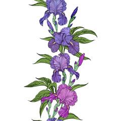 beautiful flowers iris seamless border