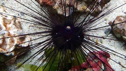 Fisch Korallenleben Aquarium Lebendig