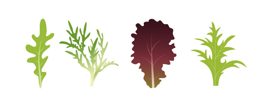 Mix of salad leaves. Arugula, spinach and lettuce leaf. Vector illustration set in flat style