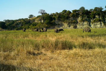 A Herd of African Elephants
