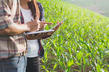 Agronomist examining plant in corn field,  Couple farmer and researcher analyzing corn plant. Wall mural