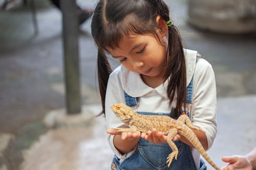 Cute asian child girl holding and playing with chameleon with curious and fun. She is not scared to hold it on hand. Wall mural