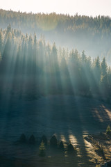 light through fog in forest on hill. gorgeous nature background in autumn. vertical