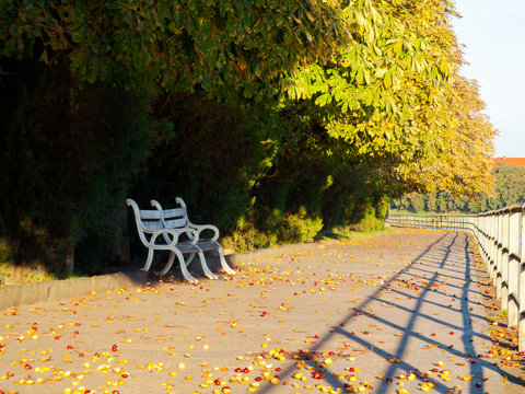 bench under the chestnut trees. lovely urban scenery in autumn. location Kyiv embankment in Uzhgorod