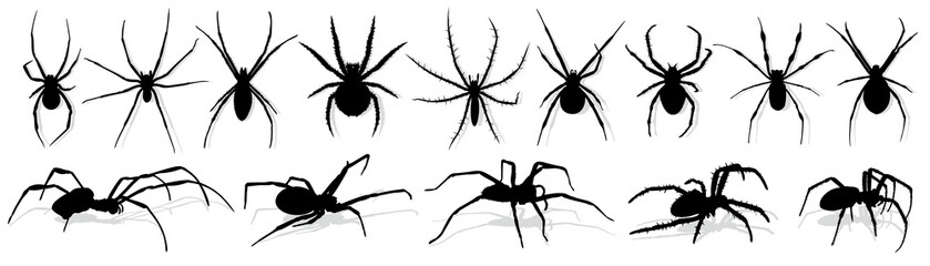 Silhouette of black spider.