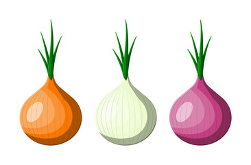Onion vegetable isolated on white.