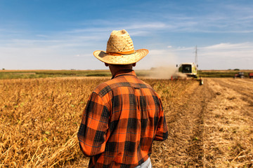 Rear view of senior farmer in soybean field supervises the harvest.