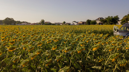france la mine aerial drone shot vertical sunflower field yellow sun trees farming vanlife wanderlust shadow