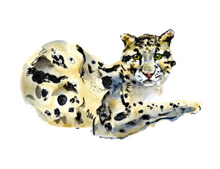 Smoky leopard. Watercolor hand drawn illustration