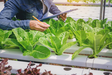 Farmer, Owner hydroponics vegetable farm in the greenhouse make a short note for care and make order the organic vegetables. Close up shot