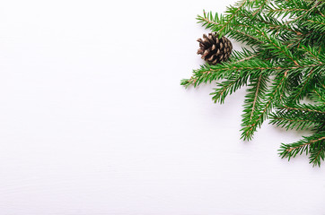 Fresh green branches of young spruce with cones on a white background. Background, copy space