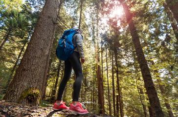 Woman Traveler Backpack Enjoying View Forest