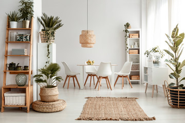 Plants on shelves and rug in white apartment interior with chairs at dining table under lamp. Real photo