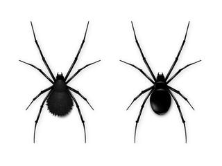 Set Black spider isolated on white background. Realistic vector illustration of black spider.