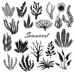 Aquarium seaweeds. Underwater plants, ocean planting. Vector seaweed black silhouette isolated set. Sea weed black, underwater sea ocean plant illustration
