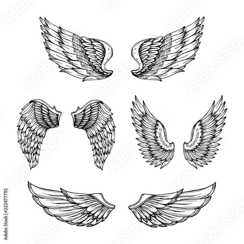 3715b10cb9cca Hand drawn wing. Sketch angel wings with feathers. Vector tattoo design  isolated. Angel wing tattoo, bird feather sketch drawn illustration