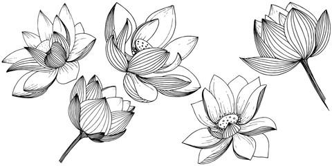 Vector lotus flower. Floral botanical flower. Isolated illustration element. Full name of the plant: lotus. Vector wildflower for background, texture, wrapper pattern, frame or border. Fototapete