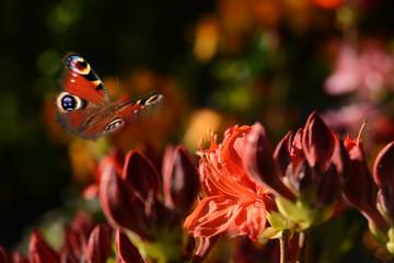 Schmetterling 492