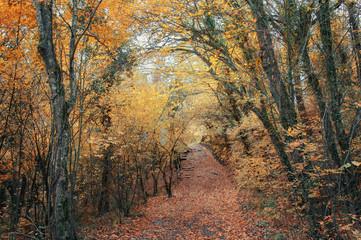 Дорога в осеннем лесу.Осенний лиственный лес на Кавказе, Краснодарский край, Россия