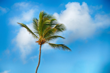 Beautiful tropical palm trees against the sky.