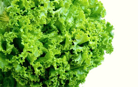 Organic Loose leaf lettuce on white background.