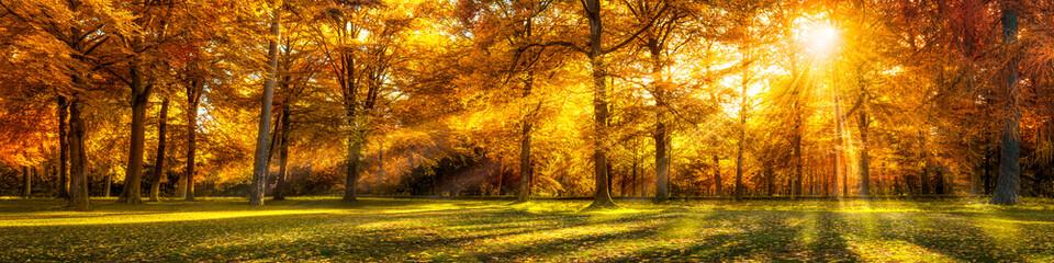 Canvas Prints Forest Wald Panorama im Herbst als Hintergrund