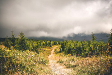 Trail on a hill with pine trees