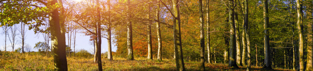 Forest in autumn colors with leaves