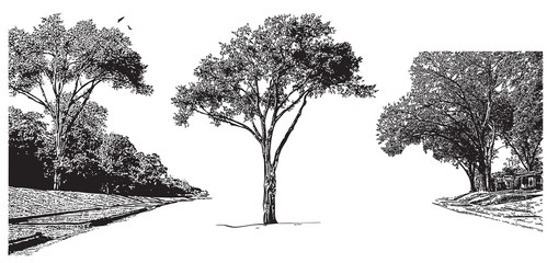 Vector landscape with trees. Black graphic illustration on white background, park outdoors scene in vintage engraving style.