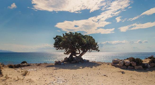 lonely tree on a greek beach