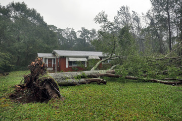 A tree uprooted by Hurricane Florence lies in front of a home in Wilmington, North Carolina