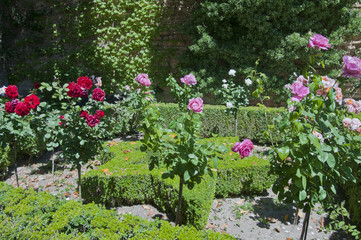 Rosengarten, Alhambra, Granada, Andalusien, Spanien