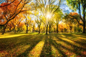 Wall Mural - Bunter Herbstwald im Sonnenlicht