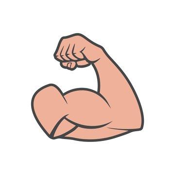 Bodybuilder muscle arm