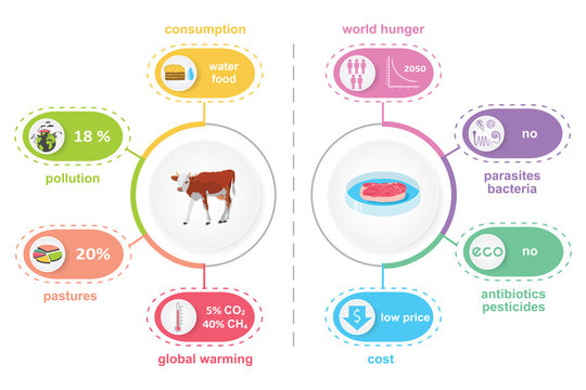 Cultured lab-grown meat infographics. Comparison of synthetic in vitro food and beef. Biotechnological industry and ecological concept. Color vector illustration