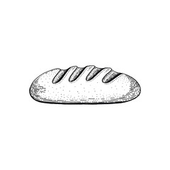 Vector illustration of hand draw wheat cereal bread. Sketched bakery concept. Black line art drawing, isolated on white background. Gluten food ingredient graphics. Engraving retro vintage icon