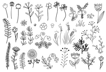 Wall Mural - Floral graphic elements