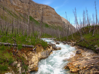 Burned trees along the turquoise river in Marble Canyon, Kootenay National Park in the Canadian Rockies of British Columbia, Canada.