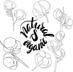 vector illustration.Line drawing of cotton flowers with lettering