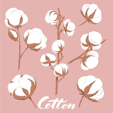 vector illustration. Hand drawn cotton flowers with lettering