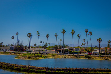 Buildings and palm trees fill the shore line at Venice Beach, CA