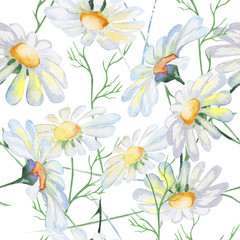 Stylized Daisies flowers illustration. watercolor