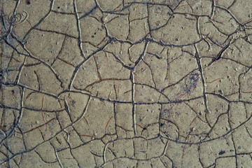 Artistic texture of wood covered with paint with patterns of cracks
