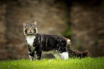 Katze am Bauernhof