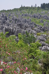 Stone Forest. Shilin Park, China.