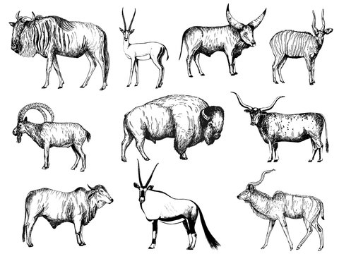 Big set of hand drawn sketch style ungulates isolated on white background. Vector illustration.