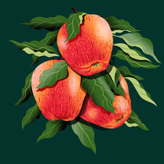 Natural fresh delicious apple branch hand drawing 3d illustration isolate on dark green background.