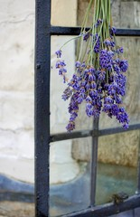 A sprig of lavender hung upside down to dry on the handle of a window outside a traditional medieval style house