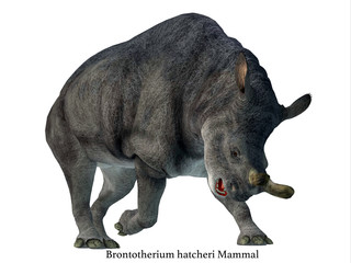 Brontotherium Mammal on White with Font